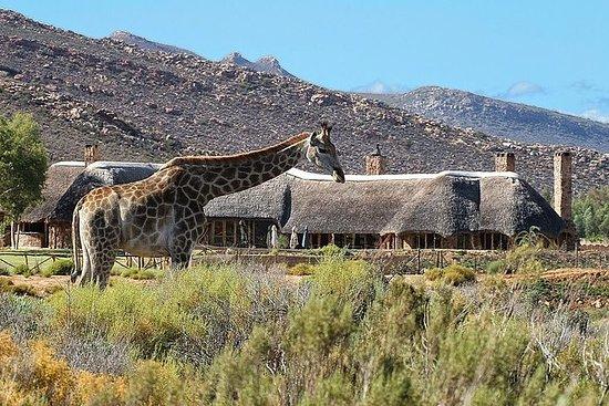 Kaapstad Tour, Aquila Safari Game ...