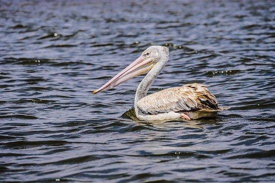 1 giorno Lago Naivasha