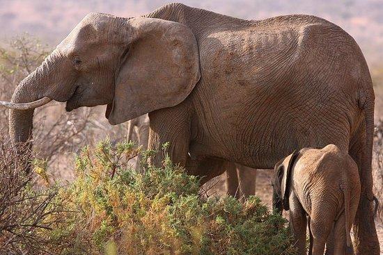 5 day safari Tarangire Serengeti and...