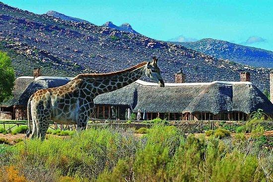 Big 5 Wildlife Safari Transferts...