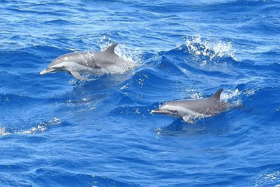 Excursions Caribbean Coast: Dolphins...