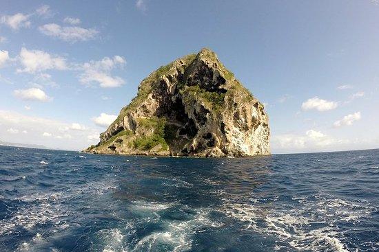 Excursion Sud Caraïbe: nage avec tortues, chauves souris, Diamant...