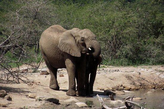 Hluhluwe Imfolozi Big 5禁猎区的全日野生动物园之旅