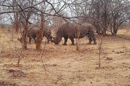 Game Drive en Rhino Walk