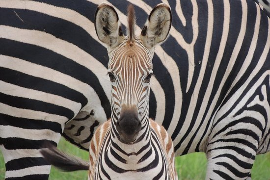 Ruaha Safari (excursion d'une journée)