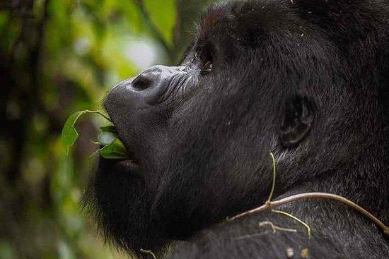 Safaris de Gorila de 3 dias na...