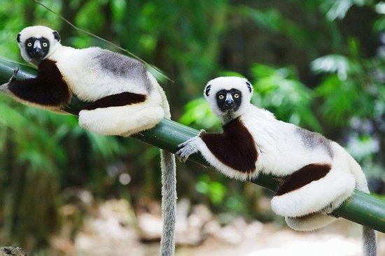 tour de Madagascar: côte EST...