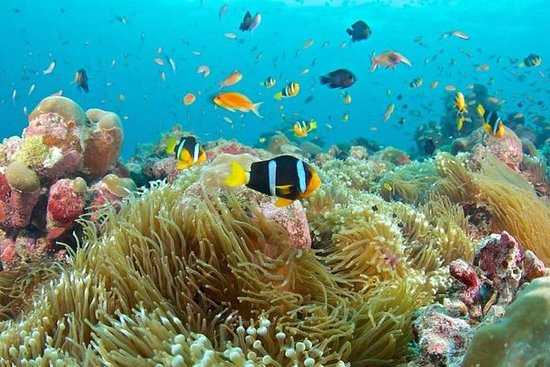 Voyages organisés: plongée libre dans...