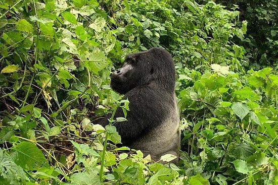 5 Day Gorillas, Wildlife and Chimpanzee Trekking Safari Fotografie