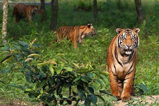 Le voyage dans les livres de la jungle (La forêt de Sundorbon au...