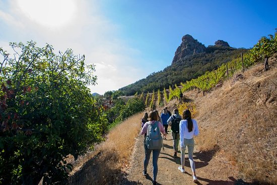 Small-Group Malibu Wine Hike