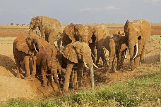 Amboseli / Tsavo West / Tsavo East 5...