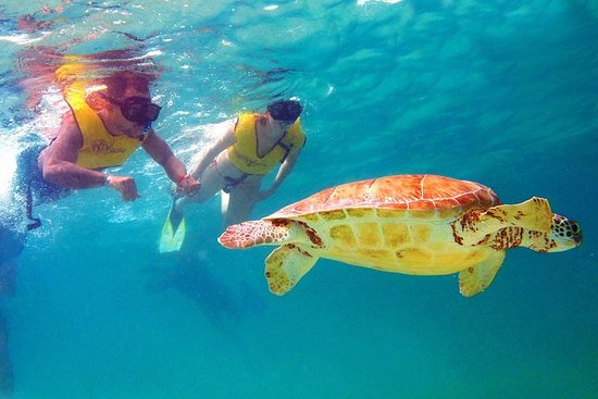 Cancun Best Deal 3x1: Snorkeling, Zip