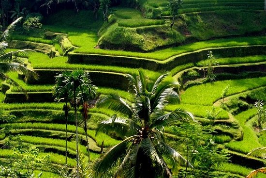 Bali Full-Day Traditional Village...