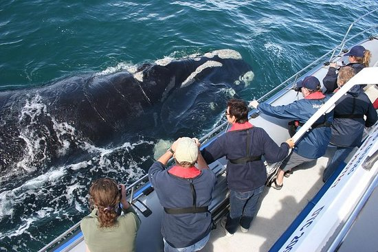 Zuid-Afrika, Kaapstad, Private Whale ...
