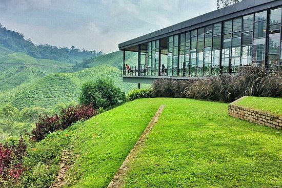Cameron Highlands Day Tour from Kuala...