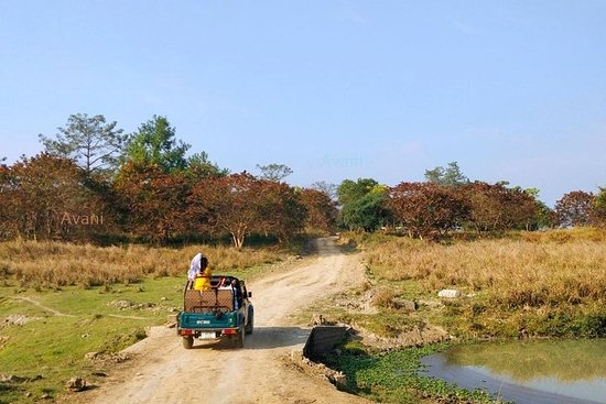 Pobitora Wildlife Sanctuary-tur från ...