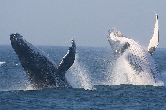 Kaapstad privétour. Hermanus Whale ...