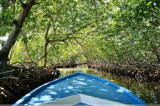 Expérience culturelle de la mangrove...