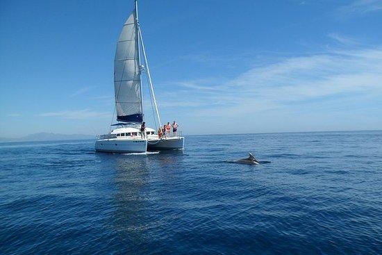 Sighting Dolphin Trip Estepona, Marbella