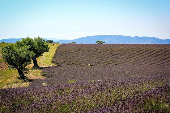 Lavender fields of Provence & Forcalquier provençal street markets...
