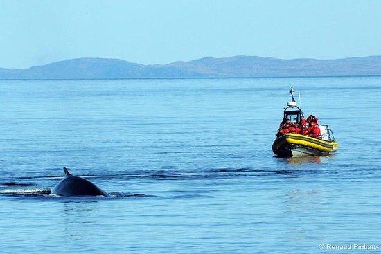 Cruzeiro para observação de baleias em pequenos grupos saindo de...