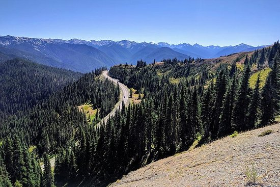 Olympic National Park Luxury Small-Group Day Tour with Lunch