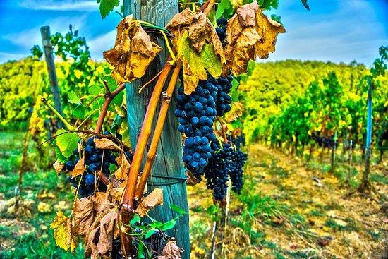 來自威尼斯的Valpolicella一日遊:品酒和維羅納