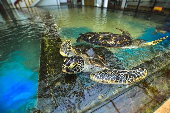 Sea Turtle Farm and Hatchery - Habaraduwa
