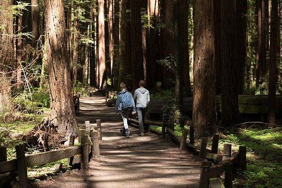 Small Group Redwoods, Californien Coast...