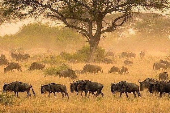 3 days serengeti & ngorongoro lodge tour Fotografie