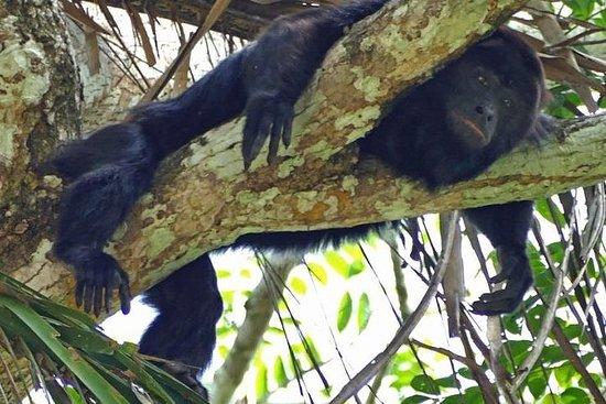 Visite de la rivière des singes au...