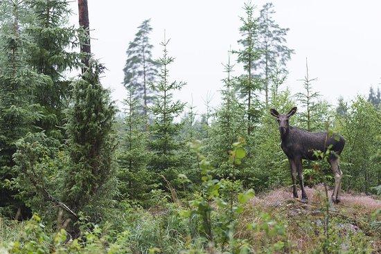 Wildlife Safari in Stockholm