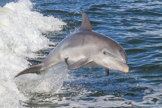 Safari de delfines