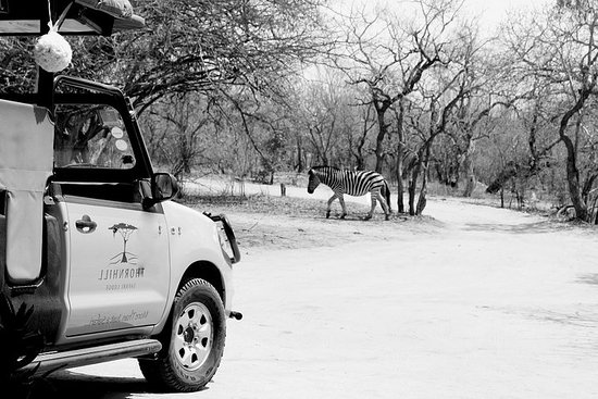 5 Tage Entdecken Sie den Kruger Park