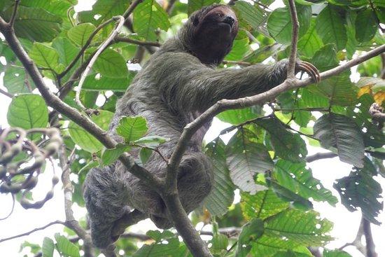 Rio Celeste Foss og Sloth Tour