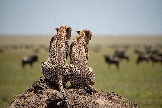 serengeti & ngorongoro 3 days group...