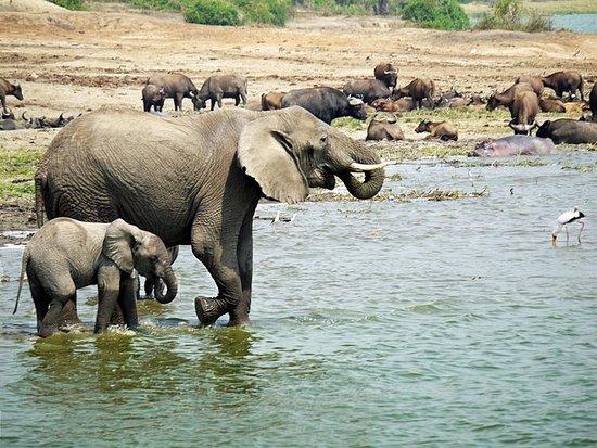 Safari no Parque Nacional Queen...