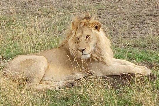 Safari do Quênia 7 dias