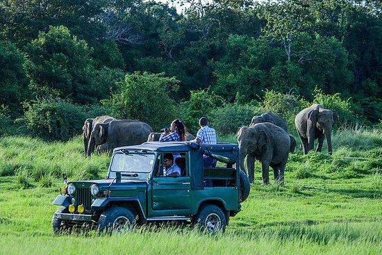 Udawalawe Safari Day Trip from Galle , Unawatuna & Surroundings - All...