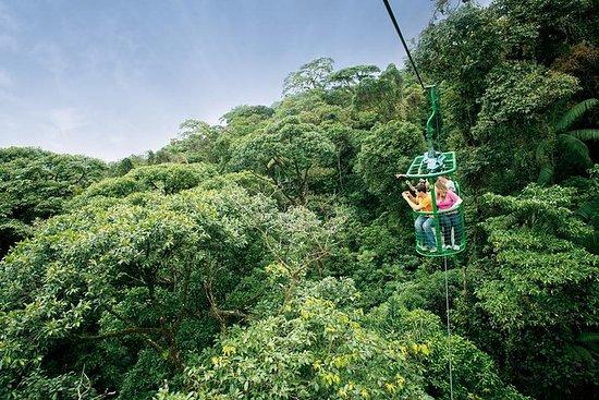 6 en 1 RainForest Adventure De San...