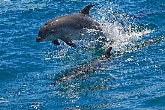 Dolphin Watching in the Wild - Tour in barca di mezza giornata