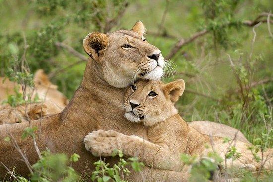 תמונה מDay Trip for Wildlife Safari from Addis Ababa