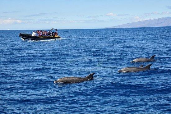 Ocean Wildlife Safari & Adventure Rafting Combo