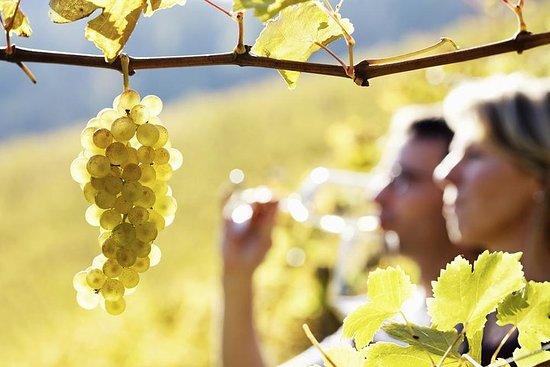Rhone Valley vin tur fra Avignon: Chateauneuf-du-Pape og Tavel