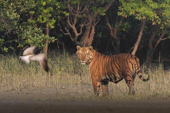Sundarban Jungle Tour 1 Noche 2 Días