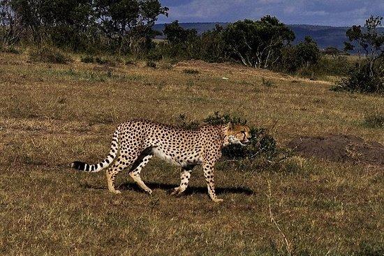 Melhor Safari Maasai Mara de 3 DIAS...