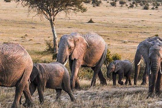 Miglior safari di 4 giorni in Maasai