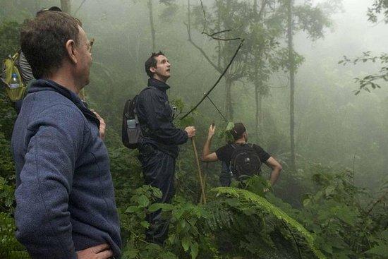 跟踪黑猩猩和在Nyungwe森林上的树冠上散步