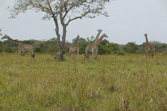 7 Days 6 Nights,Tanga, Saadani National Park,East & West Usambara...